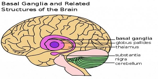 تحفيز الدماغ يمكن أن يعدل من قدرة البشر على التعلم